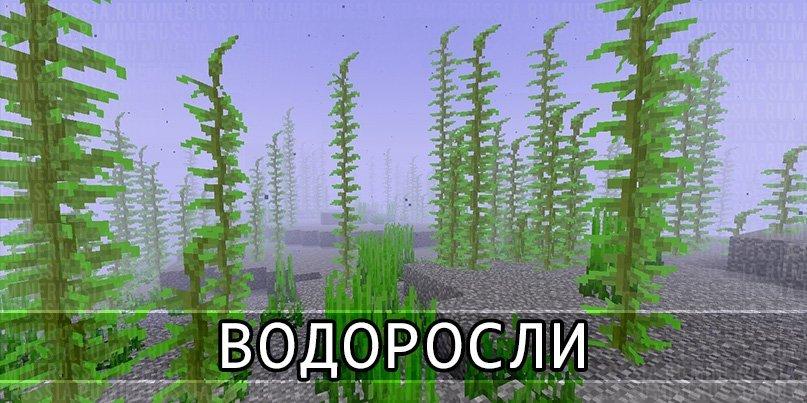 Водоросли в Майнкрафт 1.13